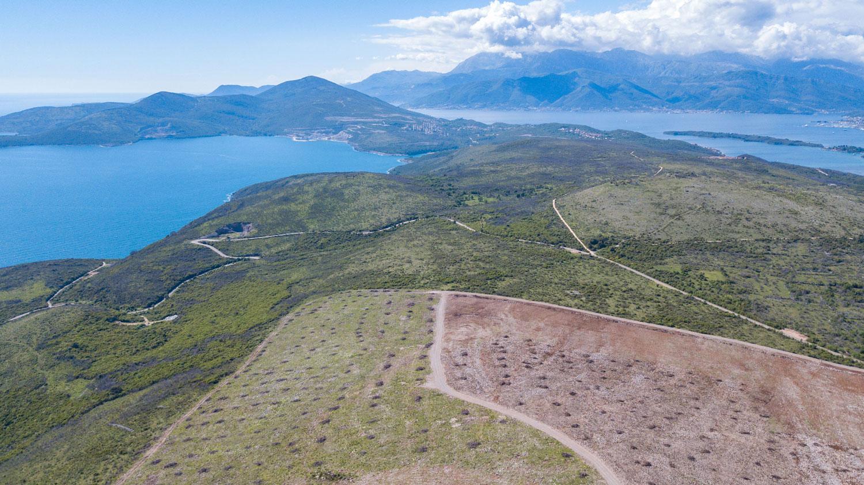 Prve španske masline posađene na crnogorskom tlu