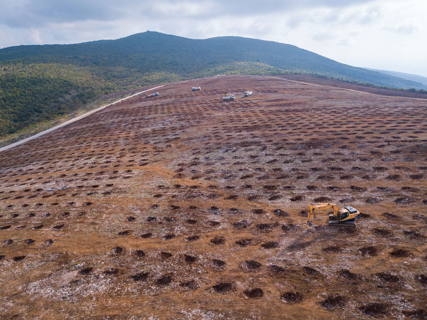 First Spanish olive trees planted on Montenegrin soil
